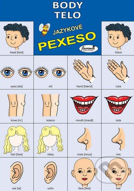 Jazykové pexeso: Body / Telo -  jazykové pexeso -  pexeso angličtina -  pexeso nemčina -  pexeso na učenie cudzích jazykov -  ako deti učiť cudzie jazyky -  ako deti učiť slovíčka v cudzích jazykoch